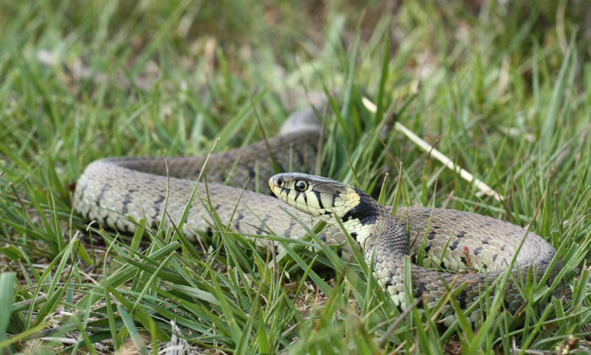 Reptile and Amphibian Group Somerset